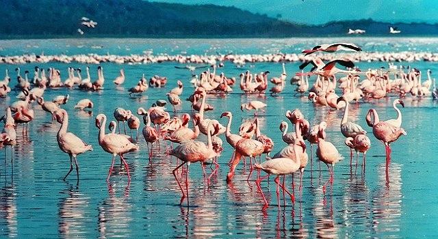 Озера и горы Кении