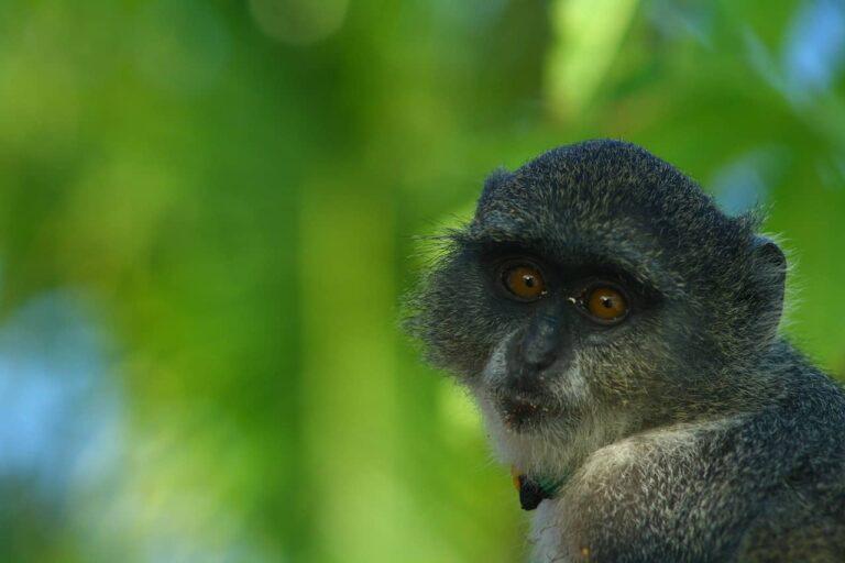 острів Занзібар, Танзанія